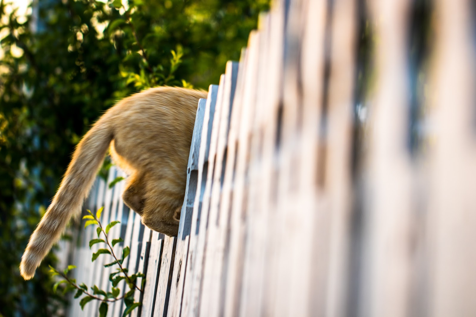 Invisible Fences' For Cats