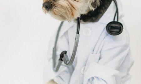 Veterinary Medicine Tech