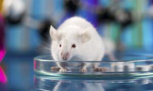Mice Model